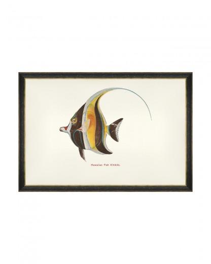 Tablou Framed Art Fishes Of Hawaii - Kihikihi Fish, 60 x 40 cm