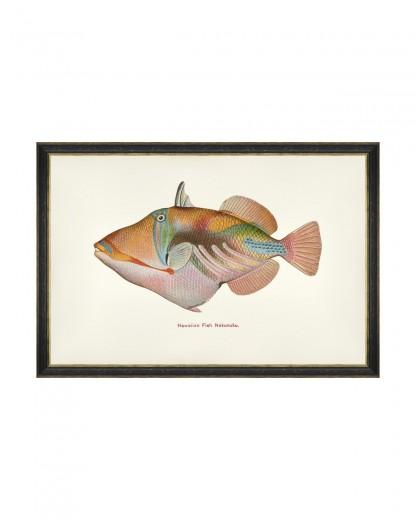Tablou Framed Art Fishes Of Hawaii - Nakunuku Fish, 60 x 40 cm