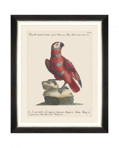 Tablou Framed Art Parrots Of Brasil X, 40 x 50 cm