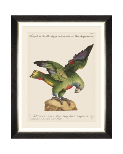 Tablou Framed Art Parrots Of Brasil XII, 40 x 50 cm