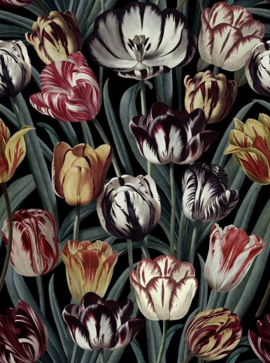 Set 3 role Tapet Imprimat Digital Tulipa Dark