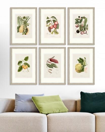 Tablou 6 piese Framed Art Vintage Fruit Plates