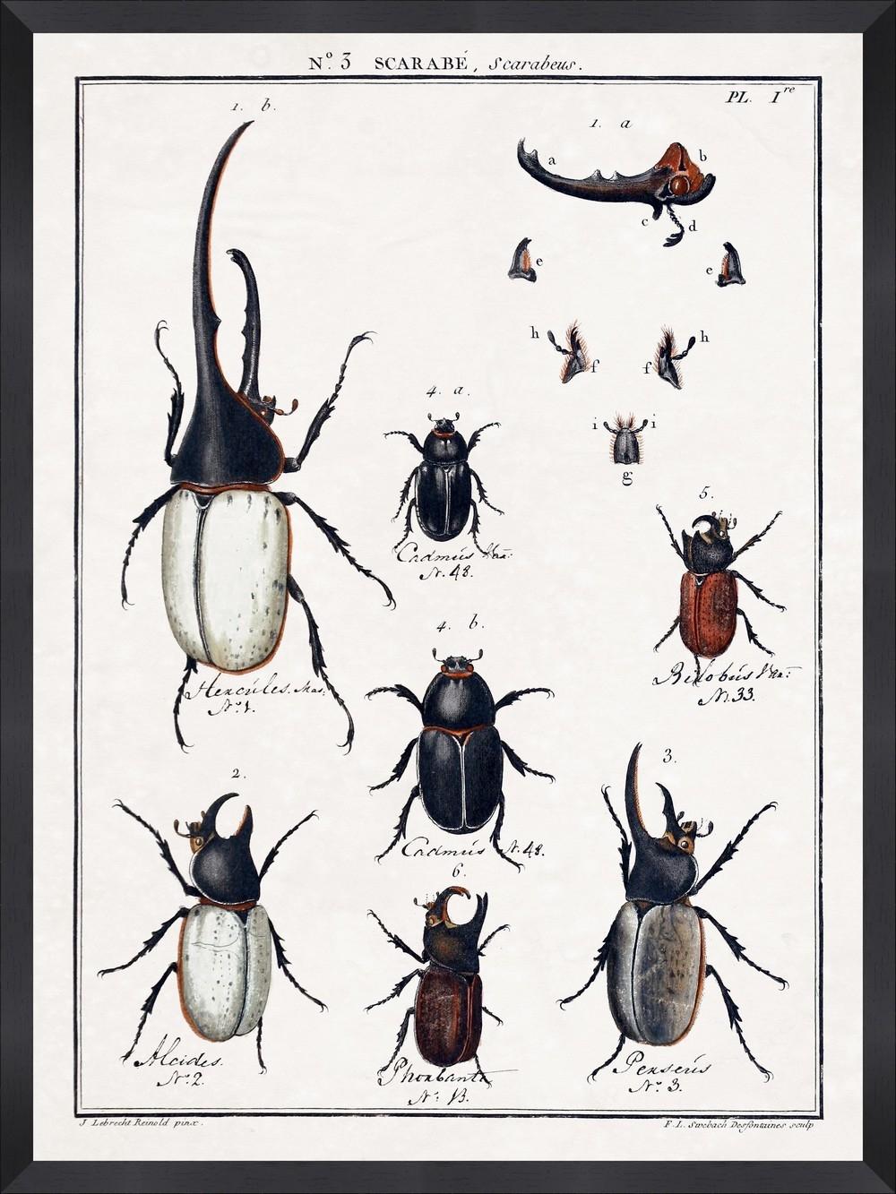 Tablou Framed Art Entomology I