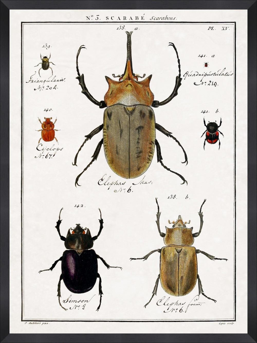 Tablou Framed Art Entomology IV
