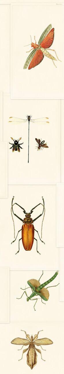 Set 3 role Tapet Imprimat Digital Entomology
