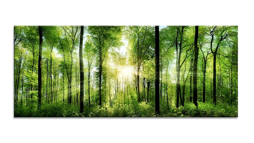 Tablou Sticla Glasspik Sunlight 50x125 cm