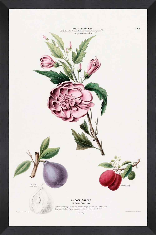 Tablou Framed Art Flore Amerique III
