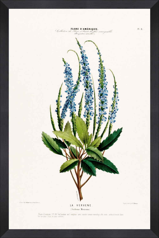 Tablou Framed Art Flore Amerique IX