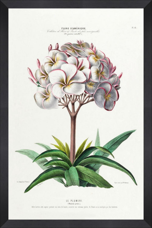 Tablou Framed Art Flore Amerique VI