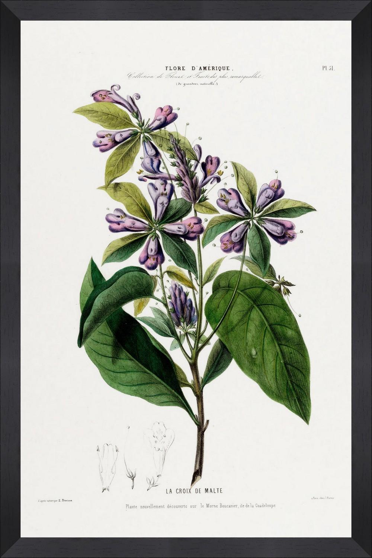 Tablou Framed Art Flore Amerique VII