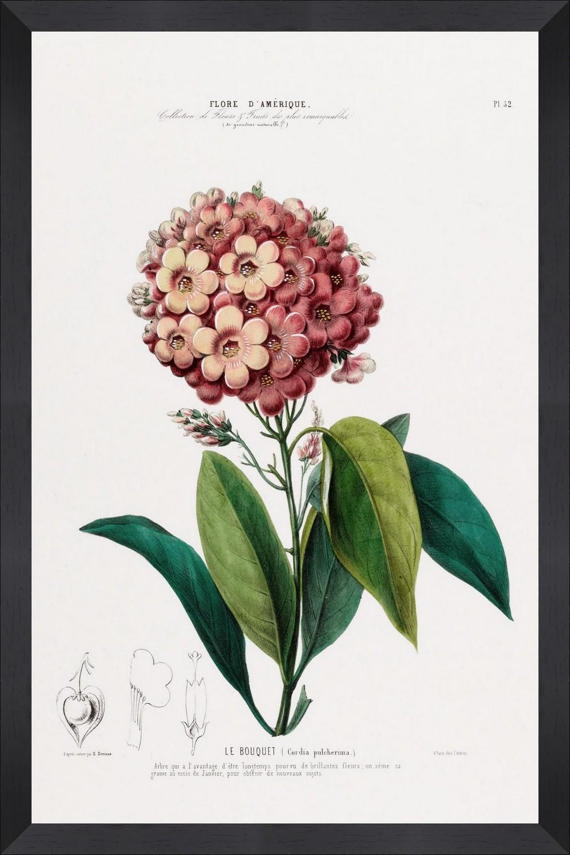 Tablou Framed Art Flore Amerique VIII