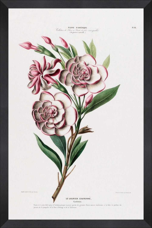 Tablou Framed Art Flore Amerique XI imagine