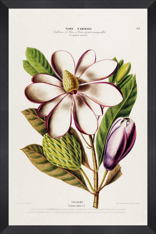 Tablou Framed Art Flore Amerique XIV somproduct.ro