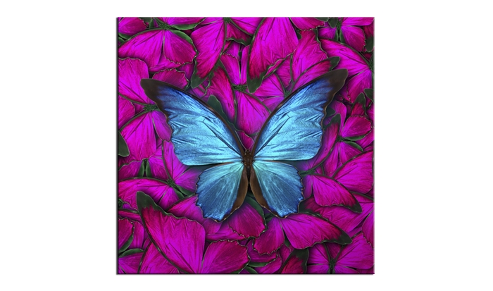 Tablou Sticla Glasspik Butterfly 20x20 cm