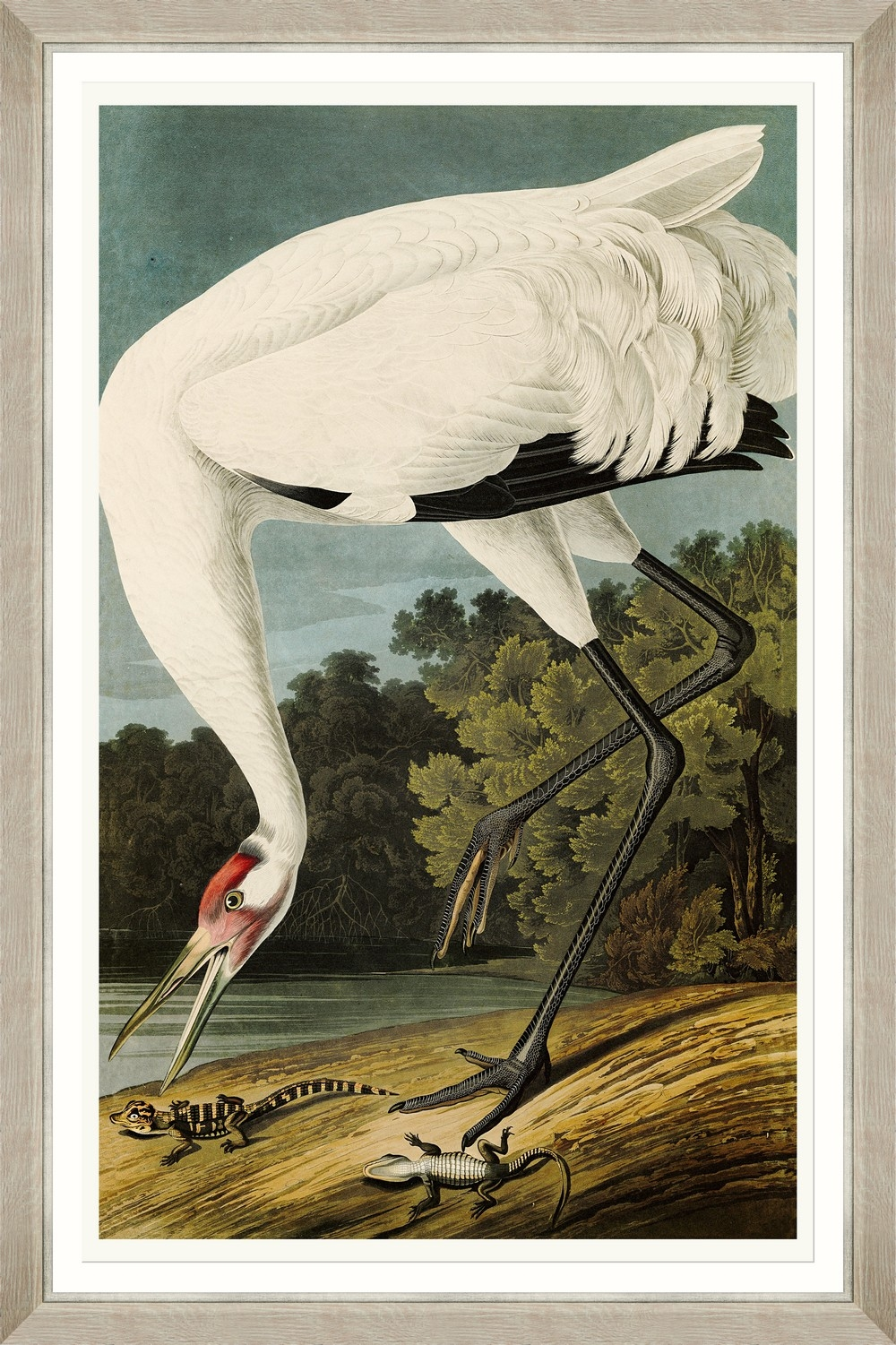 Tablou Framed Art Hooping Crane I By Audubon imagine