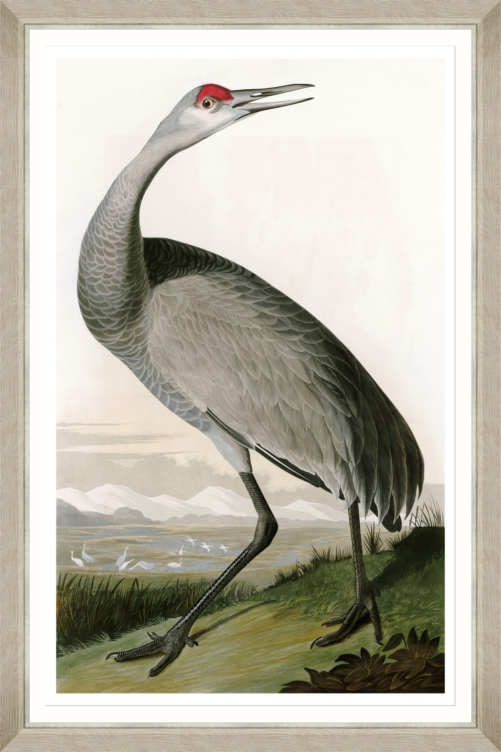 Tablou Framed Art Hooping Crane II By Audubon