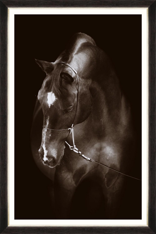 Tablou Framed Art Horse Resting
