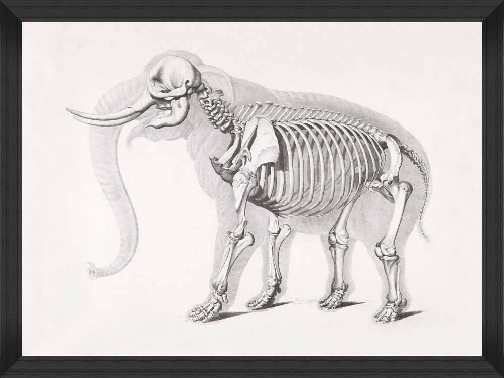Tablou Framed Art Mammoth Skeleton