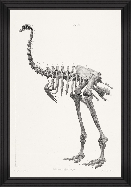Tablou Framed Art Moa Skeleton