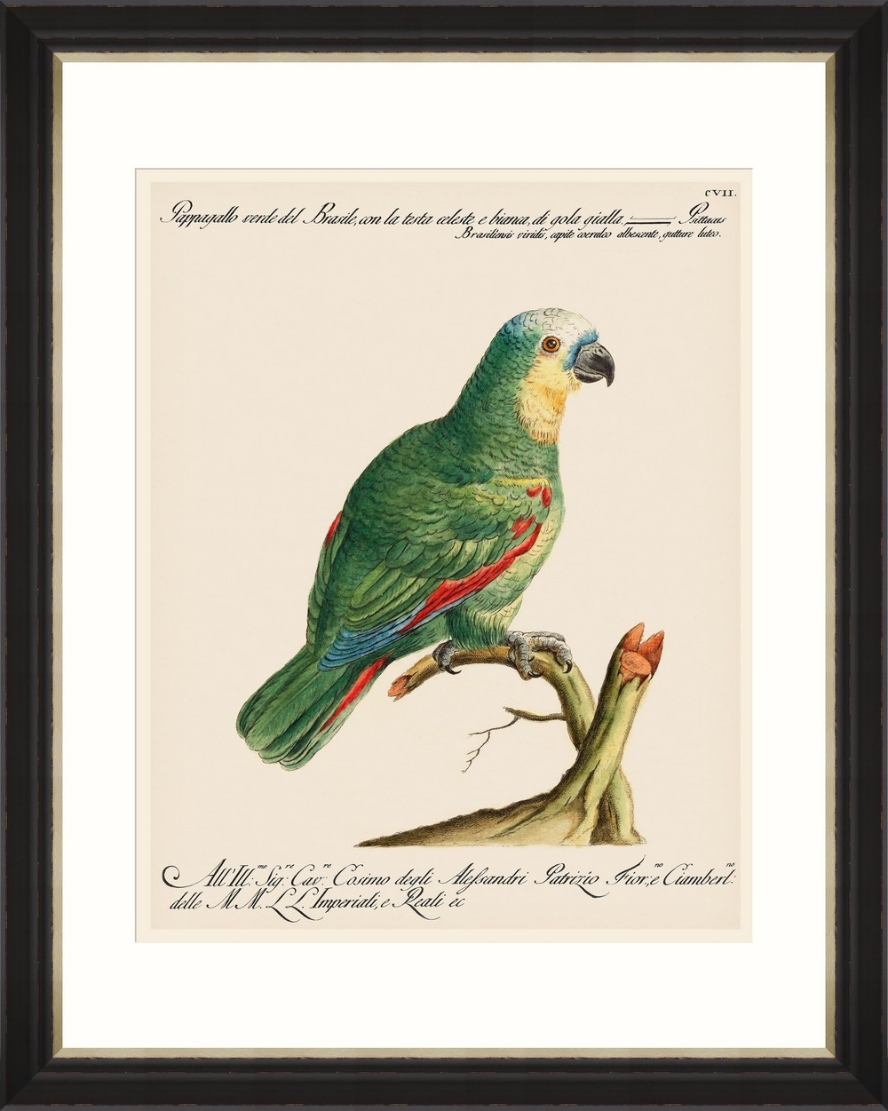 Tablou Framed Art Parrots Of Brazil 01