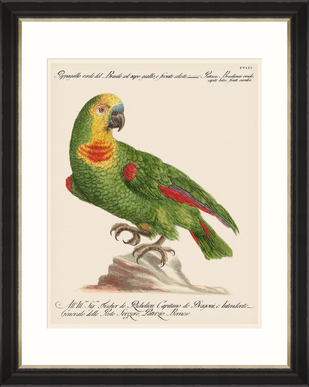 Tablou Framed Art Parrots Of Brazil 02