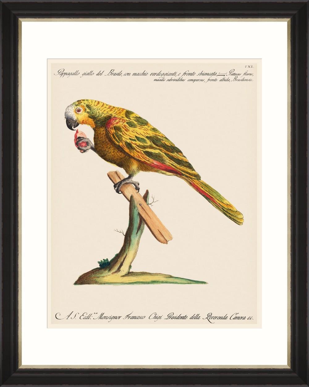 Tablou Framed Art Parrots Of Brazil 04 imagine