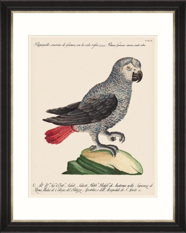Tablou Framed Art Parrots Of Brazil 06
