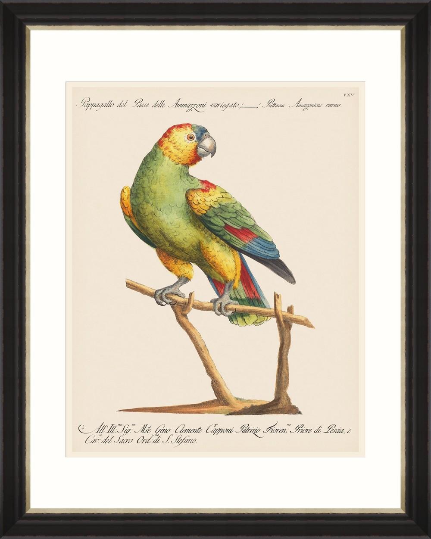 Tablou Framed Art Parrots Of Brazil 07 somproduct.ro