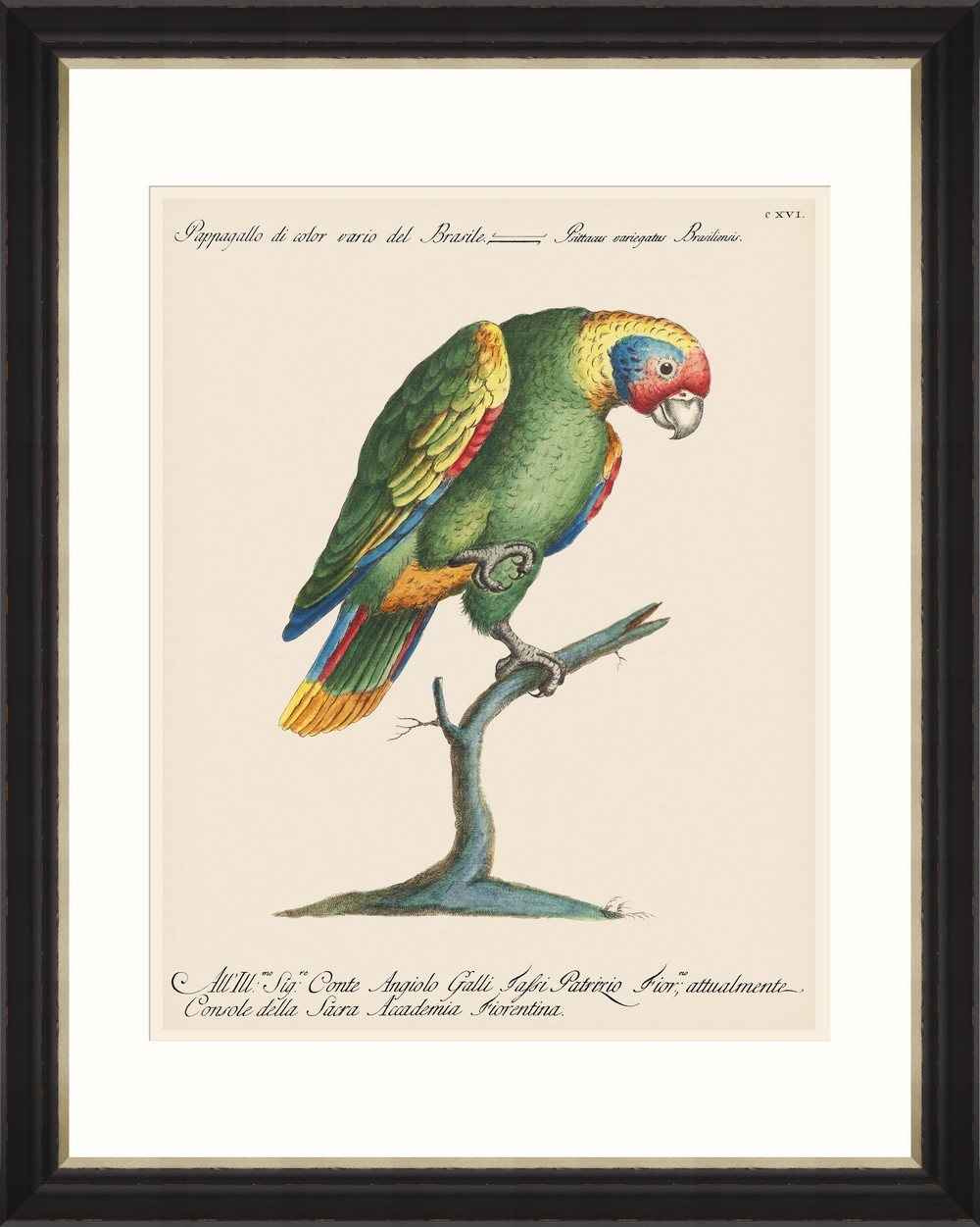 Tablou Framed Art Parrots Of Brazil 11