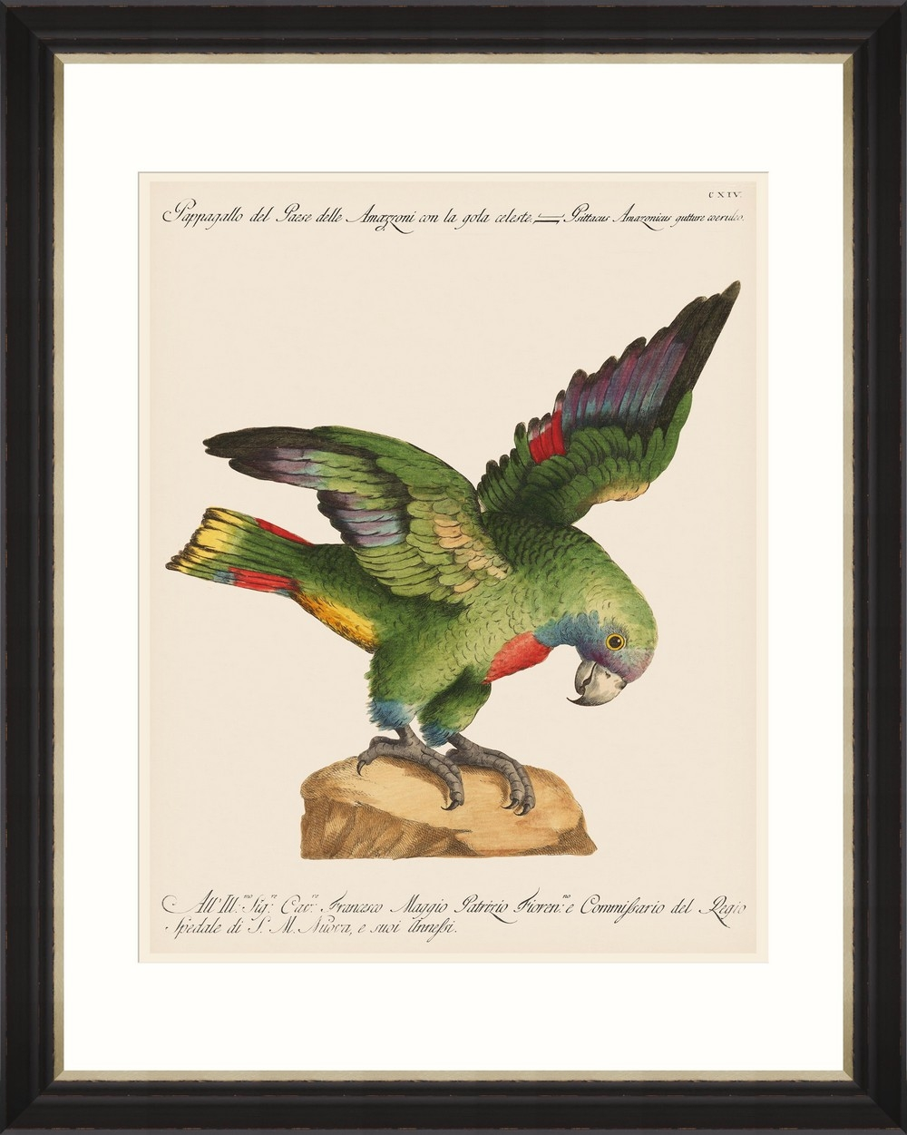 Tablou Framed Art Parrots Of Brazil 12