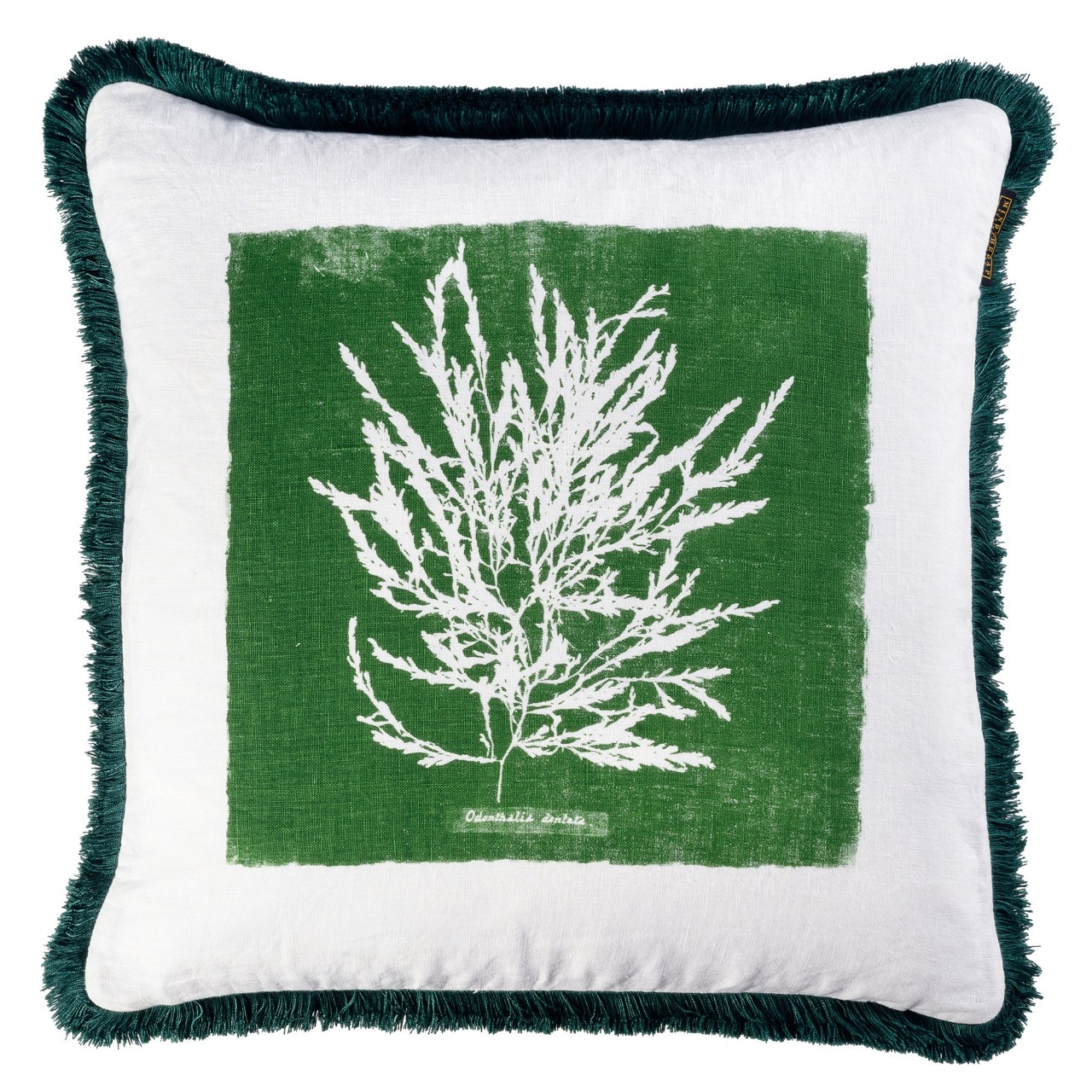 Perna decorativa Algae I Verde / Alb, L50xl50 cm poza