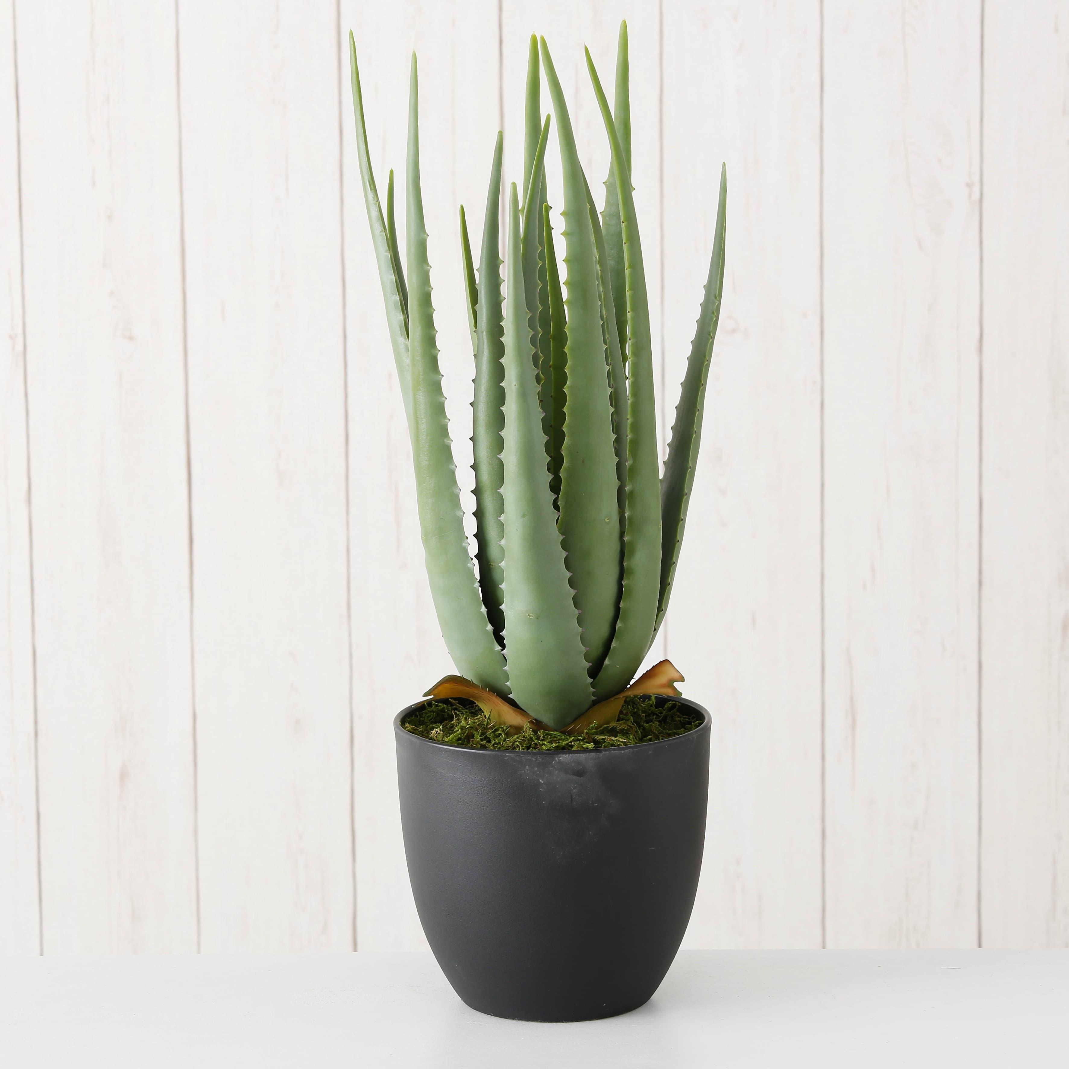 Poza Planta artificiala in ghiveci Aloe Vera Verde, H55 cm