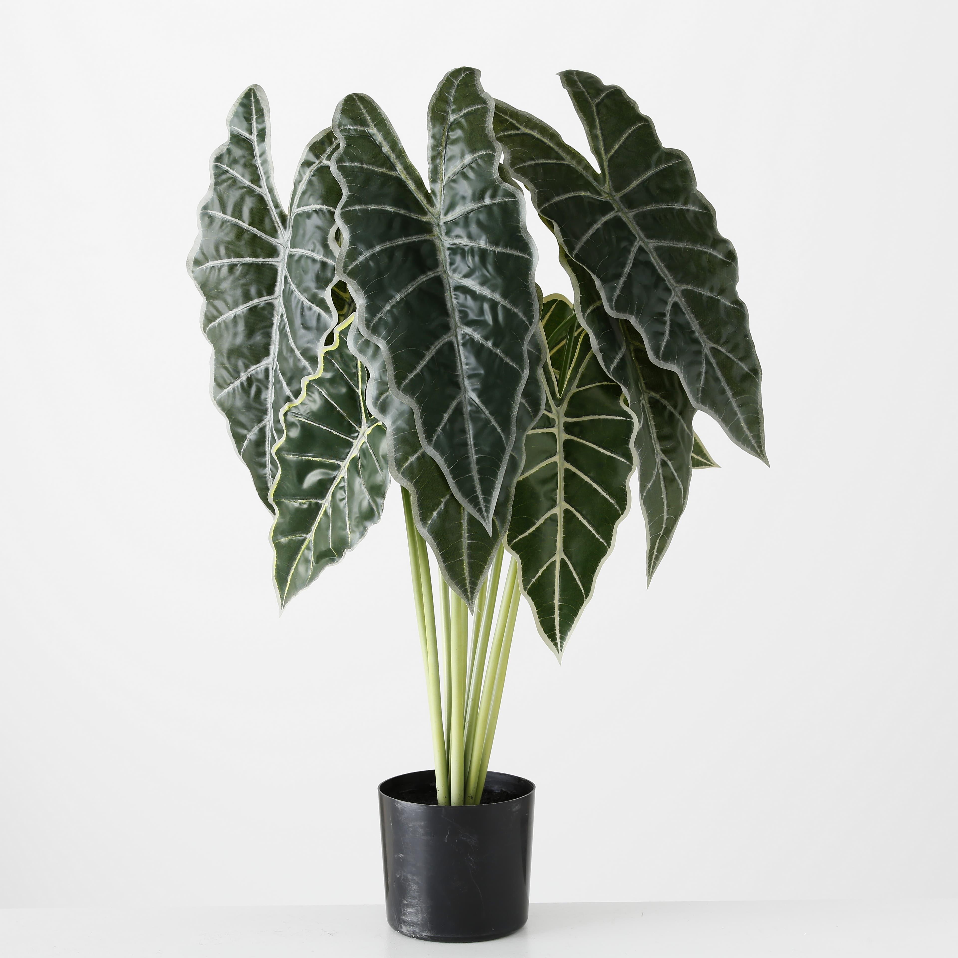 Planta artificiala in ghiveci Arrow Leaf Verde / Negru, H71 cm