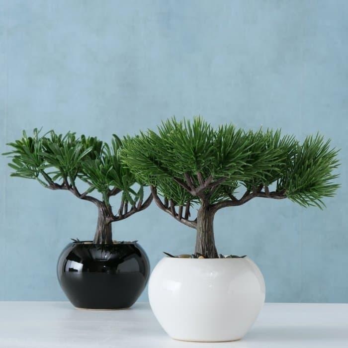 Poza Planta artificiala in ghiveci Lian Verde / Alb / Negru, Modele Asortate, H18 cm