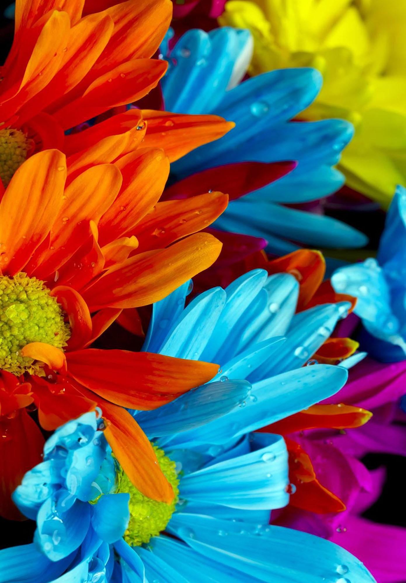 Covor Rainbow Colourful Flowers - 9969