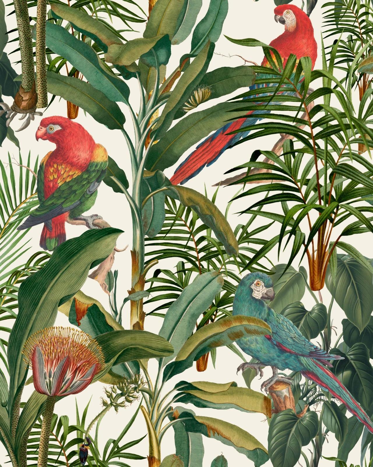 Set 3 role Tapet Imprimat Digital Parrots Of Brasil