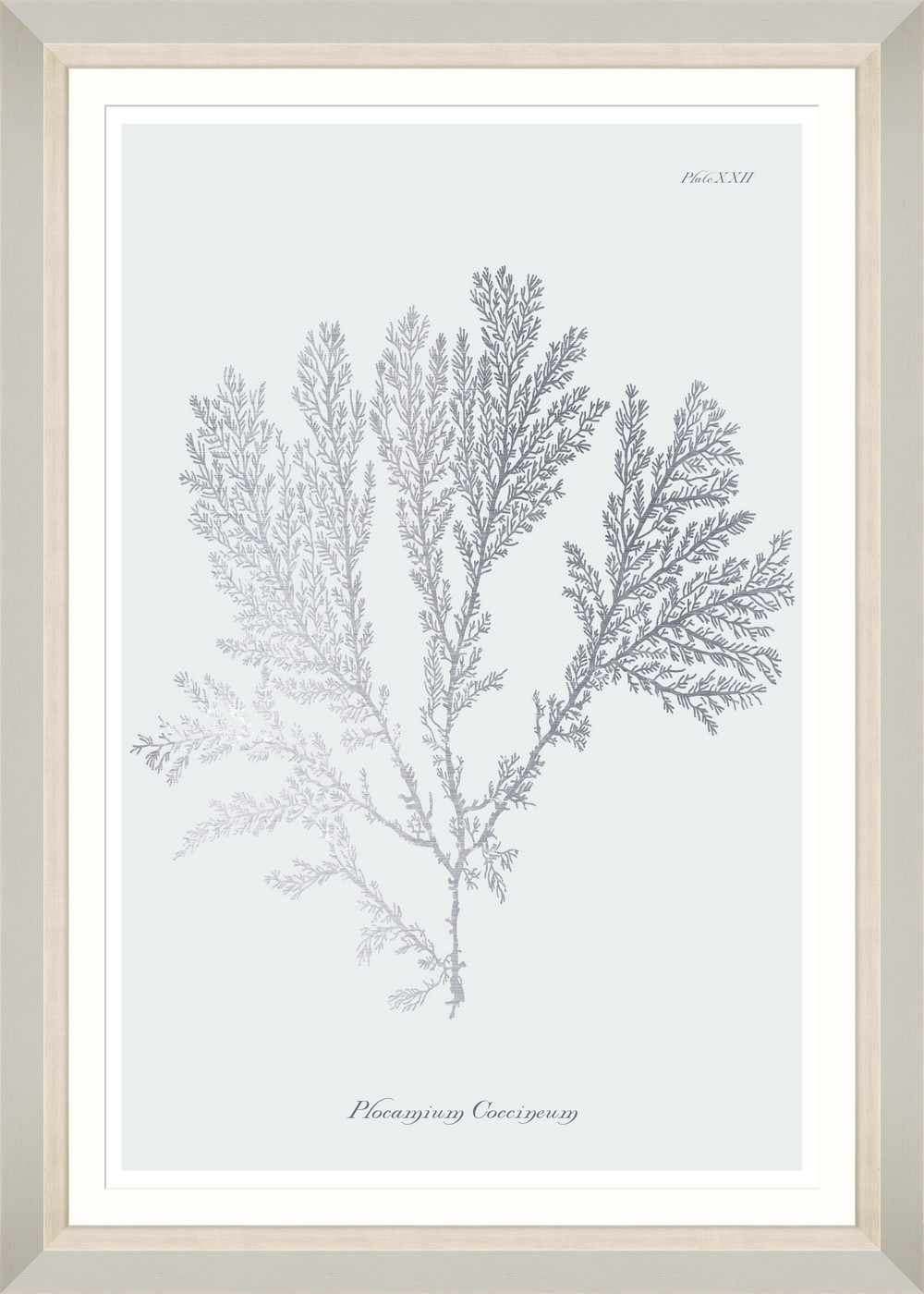 Tablou Framed Art Silver Coral II somproduct.ro