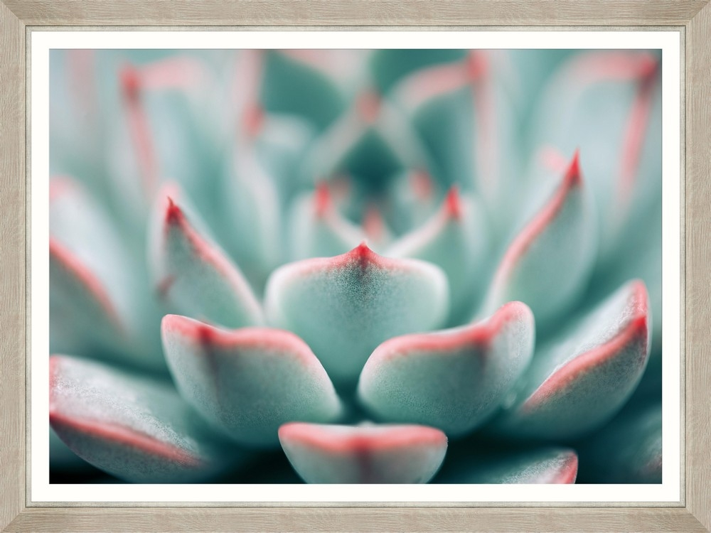 Tablou Framed Art Succulent Closeup
