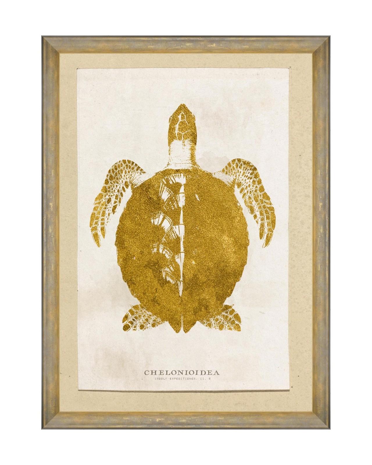 Tablou Framed Art Caribbean Sea Life - Chelonioidea, 50 x 70 cm imagine