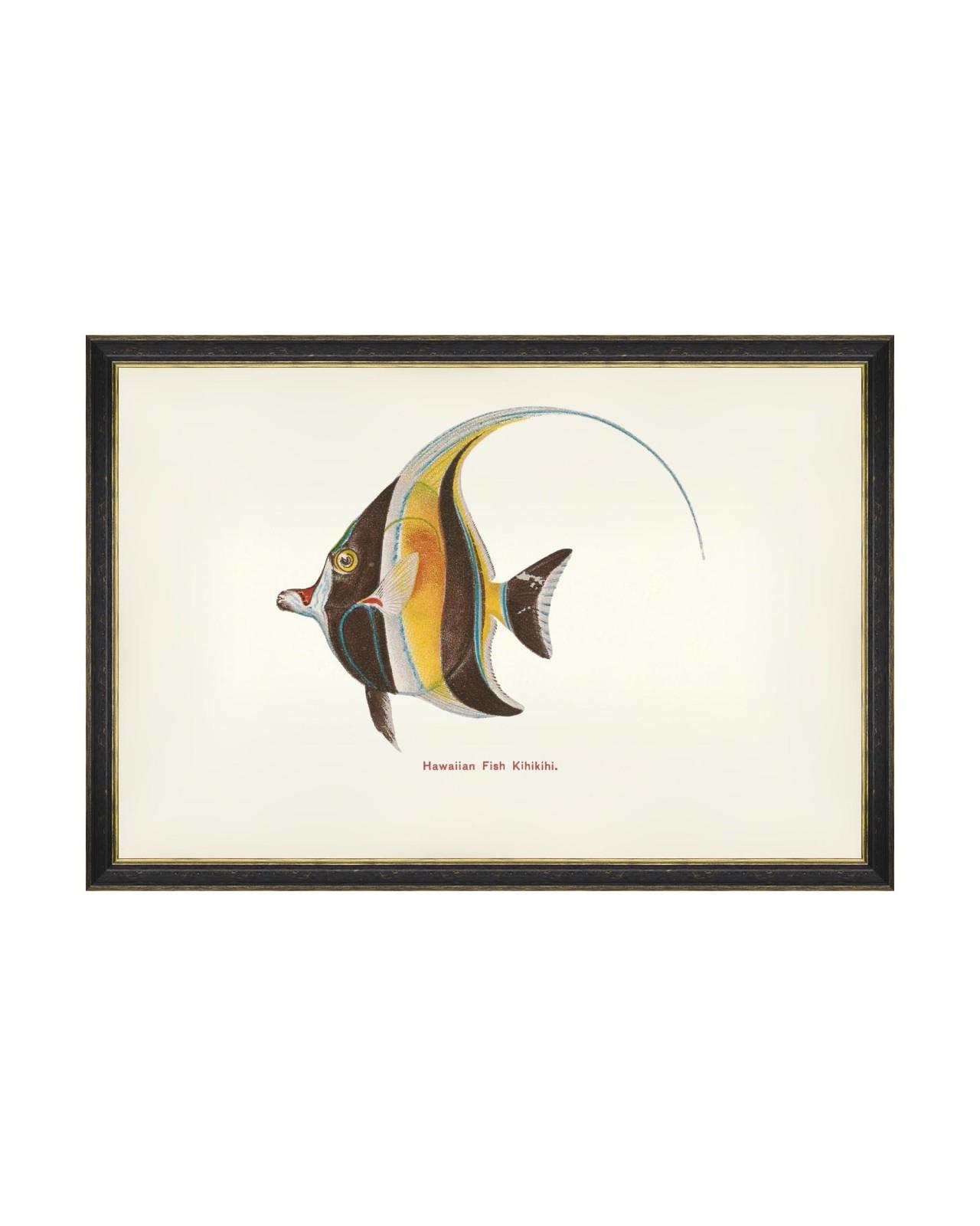 Tablou Framed Art Fishes Of Hawaii - Kihikihi Fish, 60 x 40 cm imagine