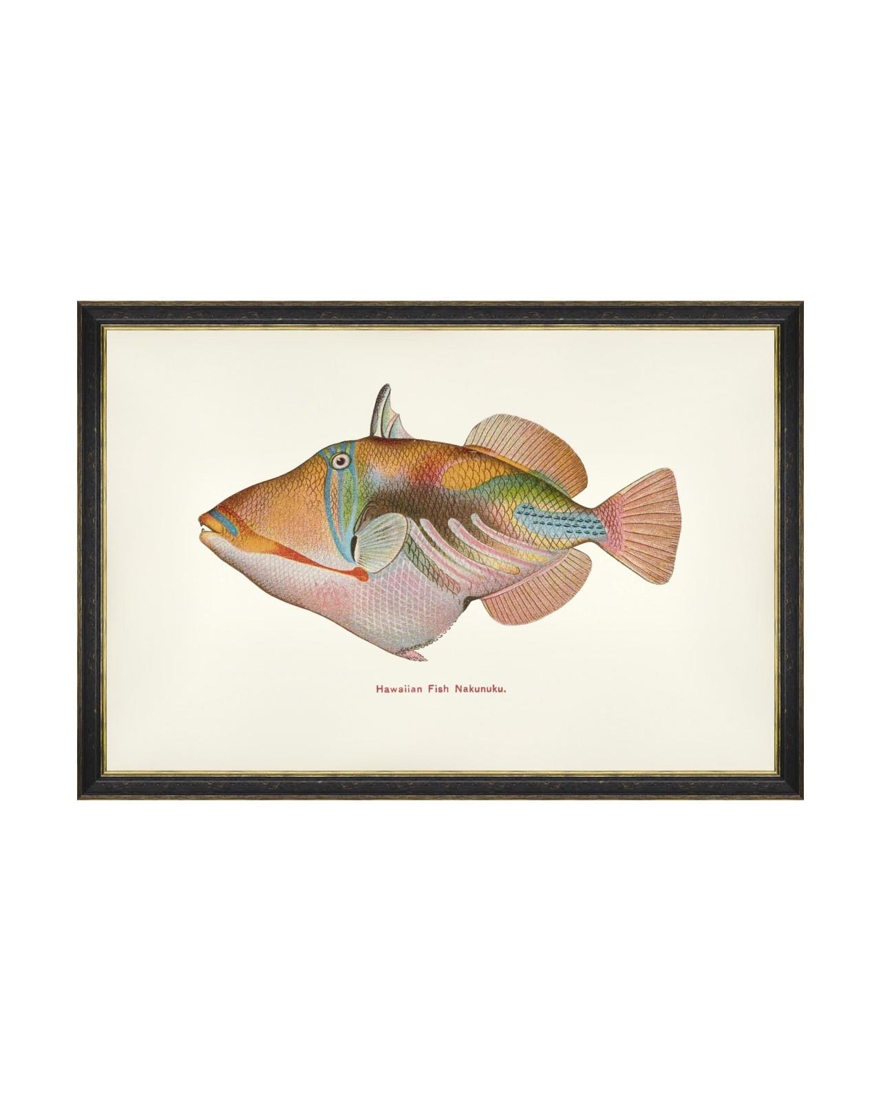 Tablou Framed Art Fishes Of Hawaii - Nakunuku Fish, 60 x 40 cm imagine