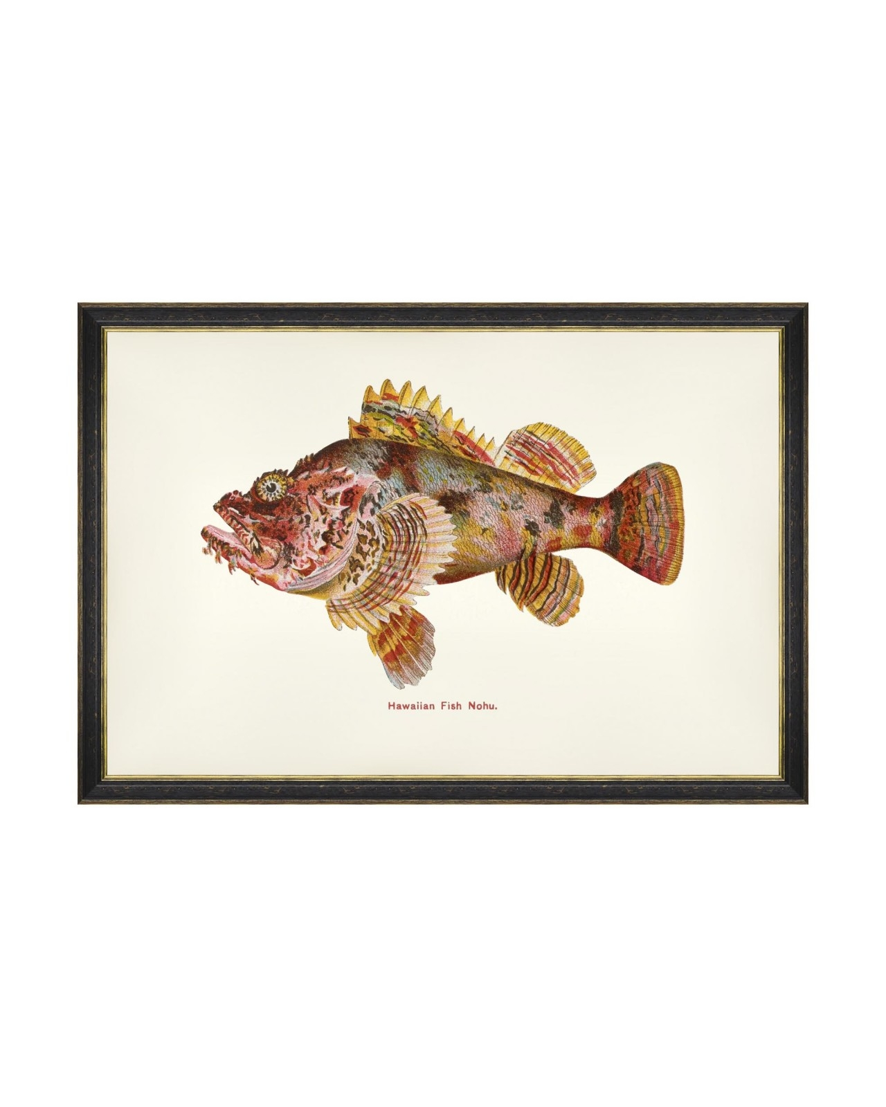Tablou Framed Art Fishes Of Hawaii - Nohu Fish, 60 x 40 cm imagine