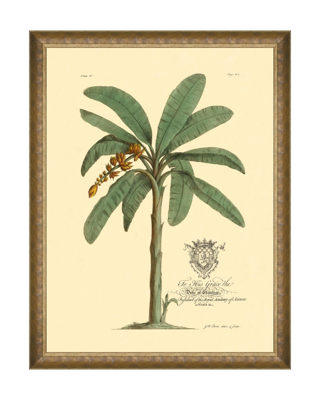 Tablou Framed Art Mussa and Palma - Mussa Paradisiaca, 60 x 80 cm imagine