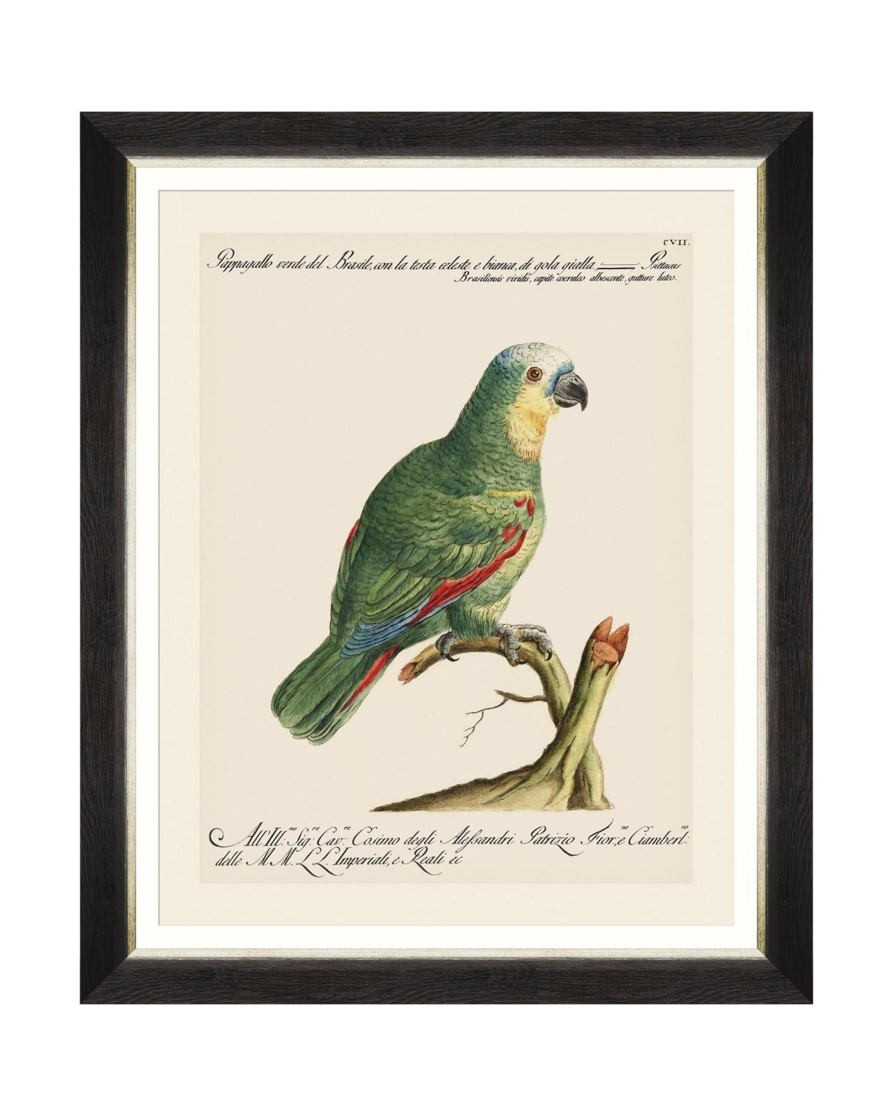Tablou Framed Art Parrots Of Brasil I, 40 x 50 cm imagine