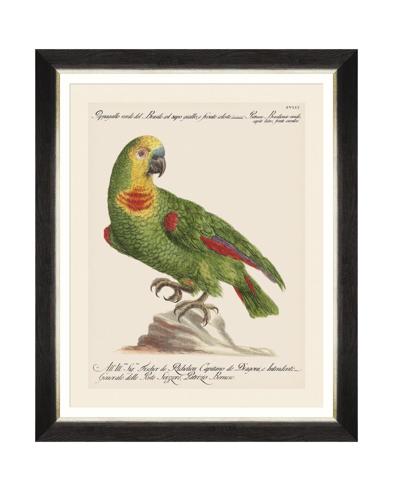 Tablou Framed Art Parrots Of Brasil II, 40 x 50 cm imagine
