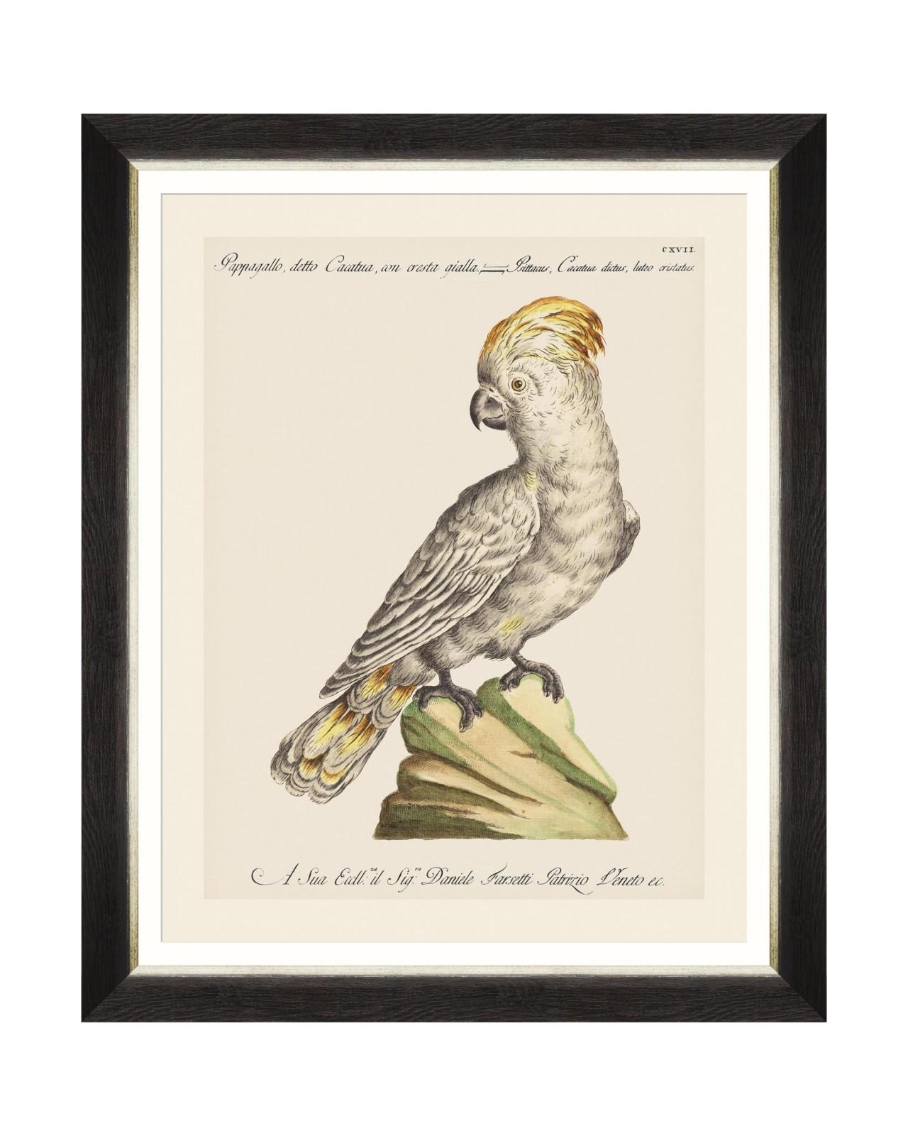 Tablou Framed Art Parrots Of Brasil III, 40 x 50 cm imagine