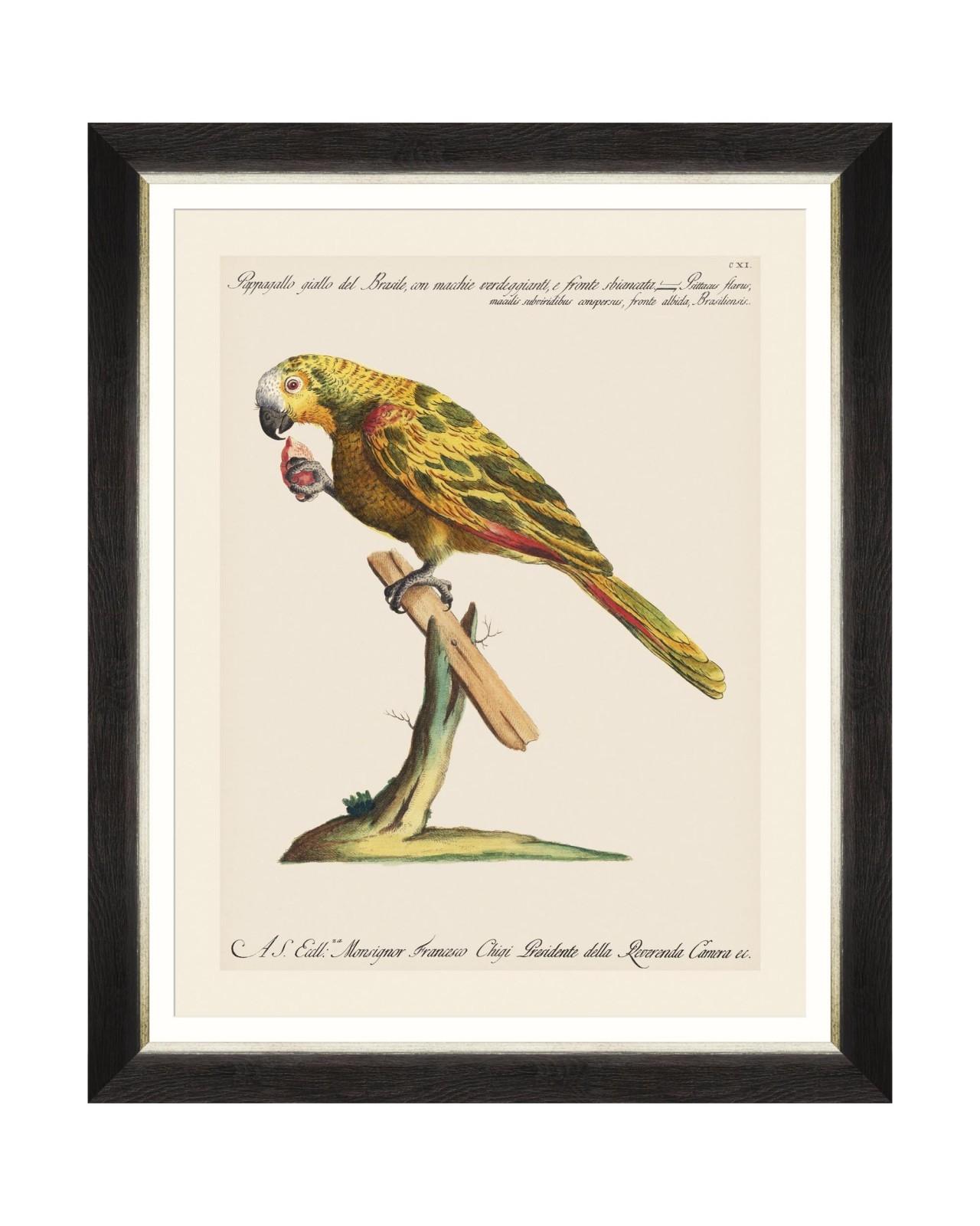 Tablou Framed Art Parrots Of Brasil IV, 40 x 50 cm imagine