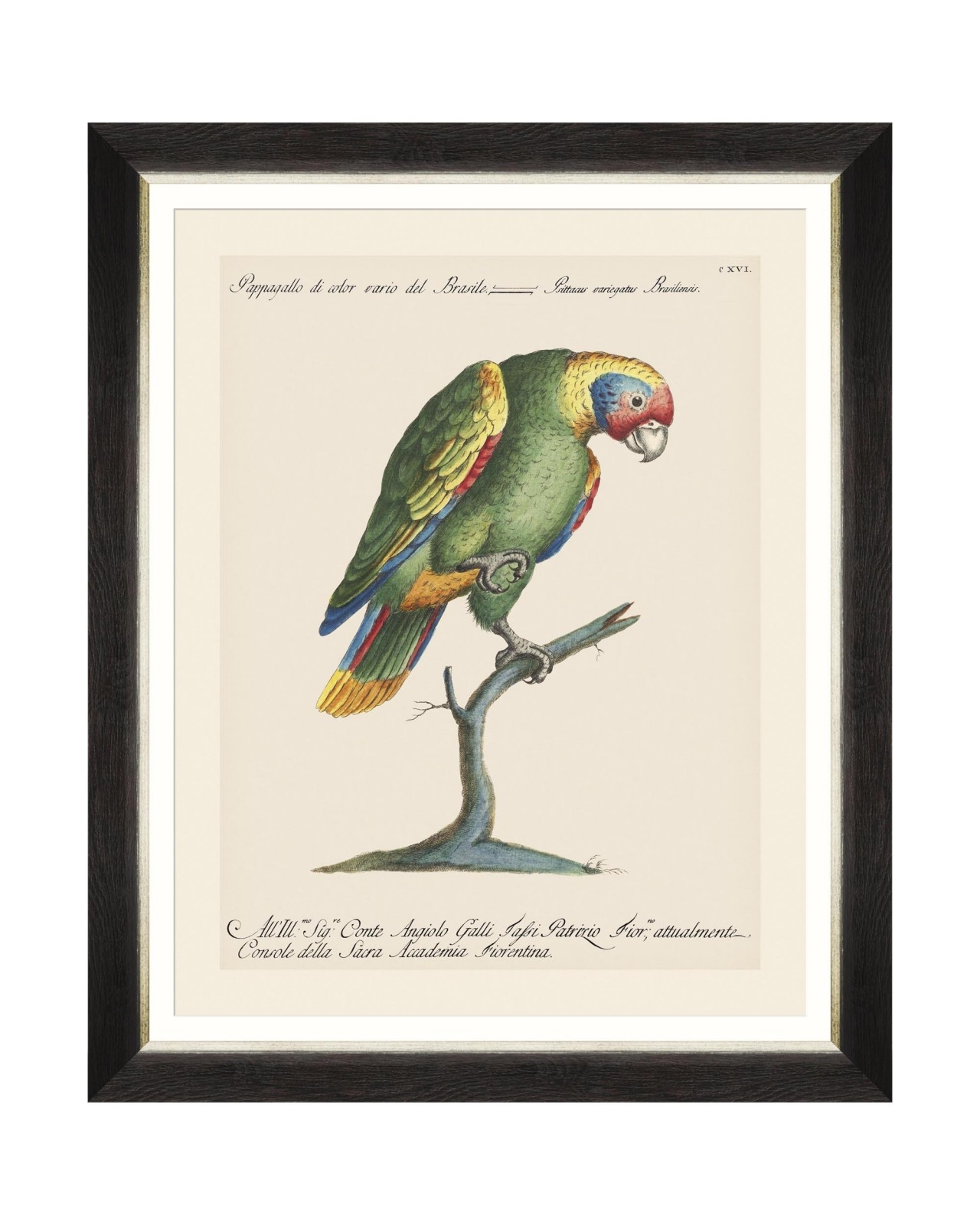 Tablou Framed Art Parrots Of Brasil IX, 40 x 50 cm imagine