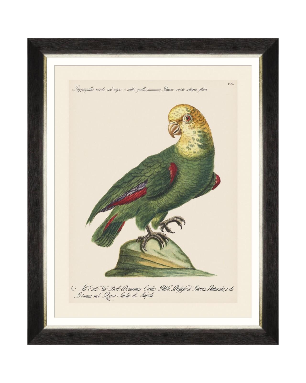 Tablou Framed Art Parrots Of Brasil V, 40 x 50 cm imagine