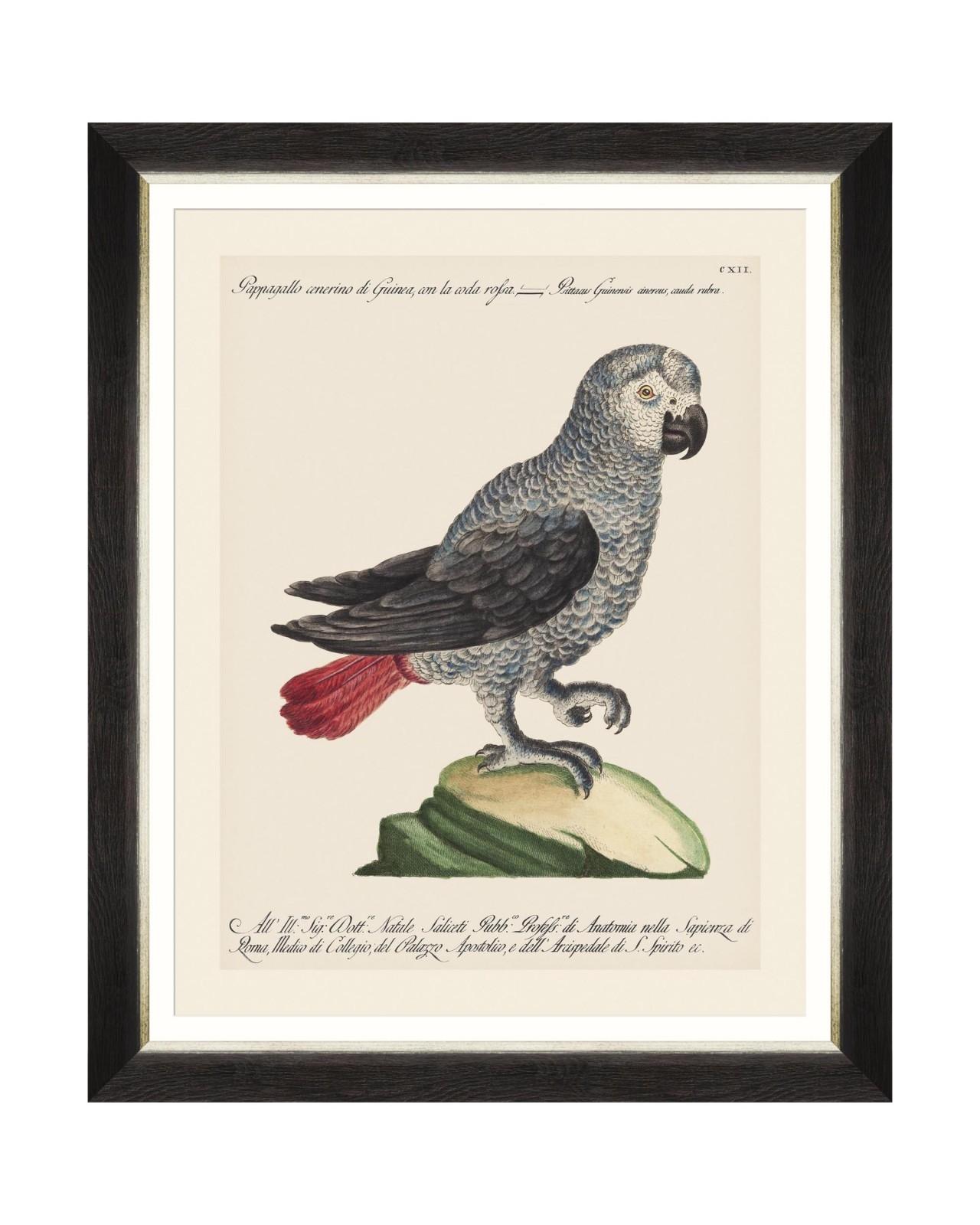 Tablou Framed Art Parrots Of Brasil VI, 40 x 50 cm imagine